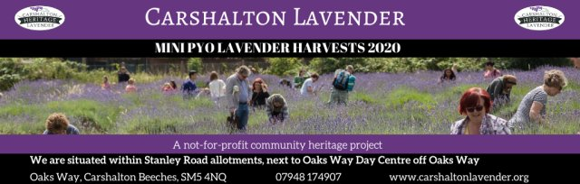 Carshalton Lavender Pick Your Own Harvest
