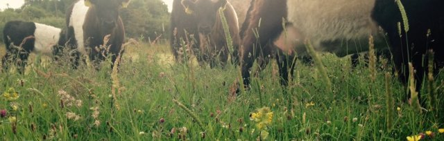 Farming For Nature Walk with Gerard Walshe - June (Co.Galway)