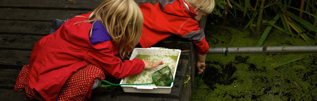 Late Summer Pond Dipping AM
