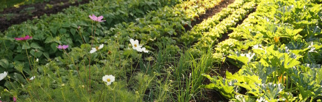 Introduction to No Dig Market gardening with Charles Dowding  at the gardens of Solawi Weinheim