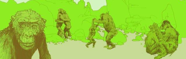 The Bonobo Experience Bristol