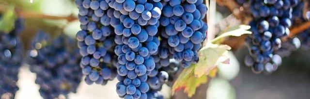 Wine & Spirits Education Trust (WSET) Online Level 3 Award in Wine -  New England Wine Academy