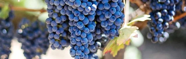 Wine & Spirits Education Trust (WSET) Level 2 Award in Wine -  New England Wine Academy