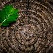 Alberta // Ecomestruazioni, scopri quali possibilità abbiamo per essere più eco friendly image