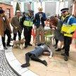 Stamford, CT Detective Day image