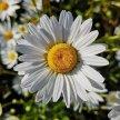 Creating Wildflower Meadows: Cemetery Park Online image