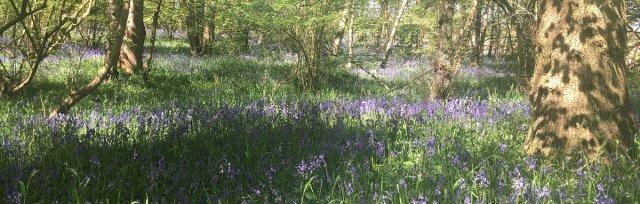 Warwickshire, Coventry, Autumn Wild Food Foraging Course/Walk