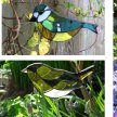 Stained Glass Mosaic Garden Birds with Yvette Green - £68 image