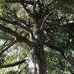 Gloucestershire Tremendous Trees Course/Walk image