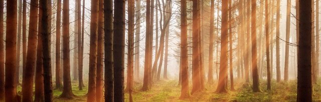 Healing Post-COVID Trauma & Complex Grief Webinar