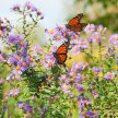 Create Your Own Butterfly Garden image