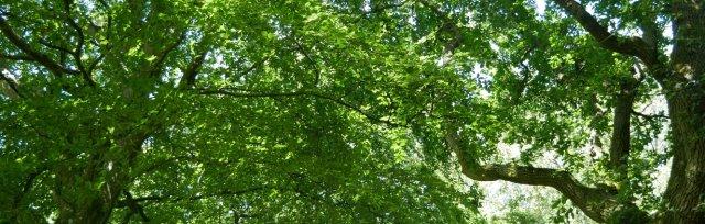 Half-term tree planting