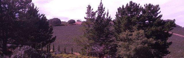 High Fragrance Picnic Arbor in the Lavender