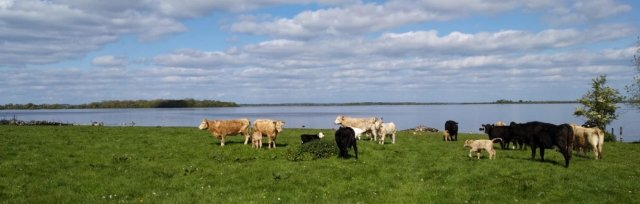 Farming For Nature Walk with Mervyn Auchmuty - June (Co.Roscommon)