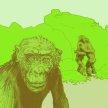 The Bonobo Experience Bristol image