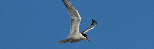Online Course: The Wonders of Bird Migration with John Buckingham