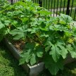 In and Outside the Box: Building a Vegetable Garden Bed image