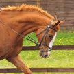 Demonstration of Confidence Giving Training for Horse & Rider image