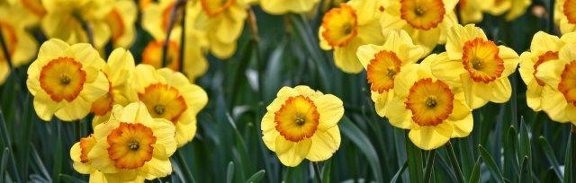 Resurgence Earth Festival: Spring Equinox