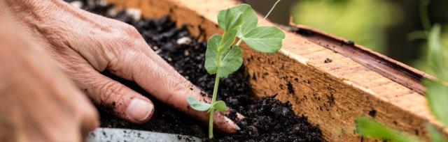 Building a Vegetable Garden at Home