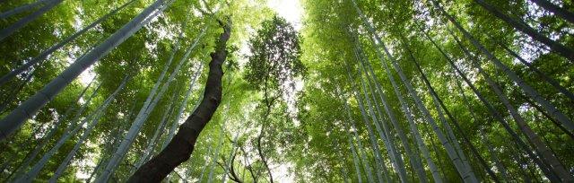 Ökologie des Bewusstseins Thementag