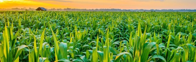 Crops, Seeds & Soil (CSS) 4.0 2021