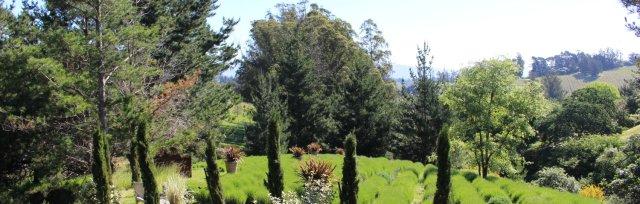 Green Spring Picnic Arbor in the Lavender