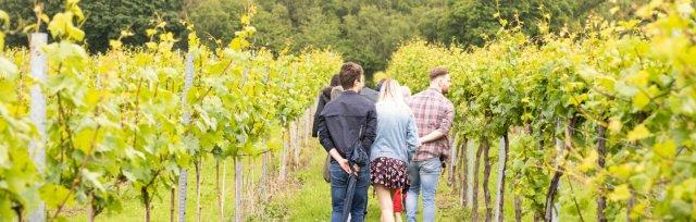 Bolney Wine Estate - Tour, Tasting & Transport