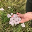 Foraging Walk at Forty Hall Farm image