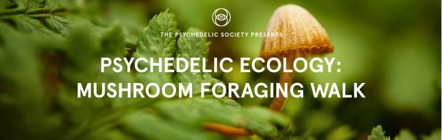 Mushroom Foraging Walk