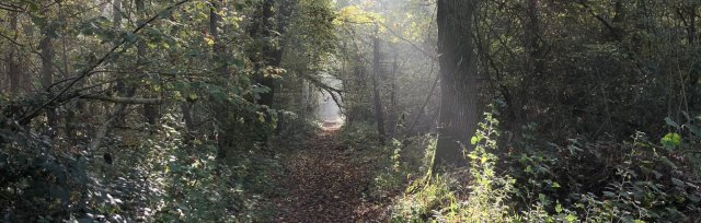 Gloucestershire Autumn Wild Food Foraging Course/Walk