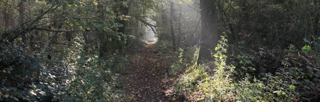 Buckinghamshire Autumn Wild Food Foraging Course/Walk