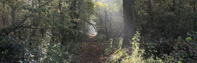 Gloucestershire Spring Wild Food Foraging Course/Walk