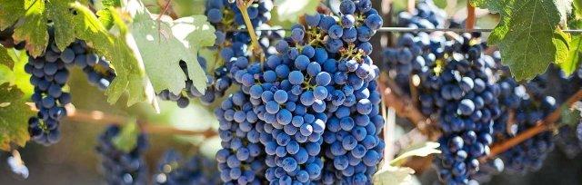 Wine & Spirits Education Trust (WSET) ONLINE Level 1 Award in Wine -  New England Wine Academy