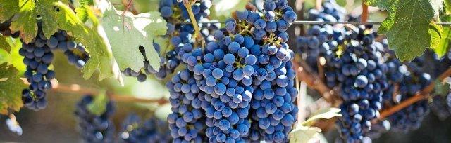 Wine & Spirits Education Trust (WSET) Level 1 Award in Wine -  New England Wine Academy