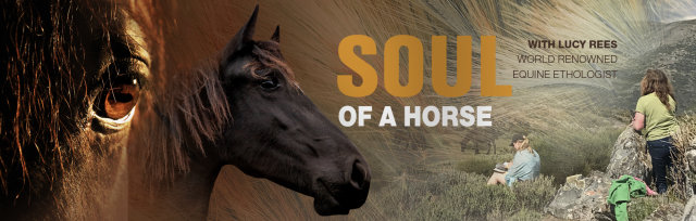 The Soul of a Horse with Lucy Rees