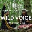 Wild Voice image