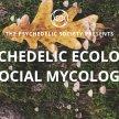 Psychedelic Ecology: Social Mycology image