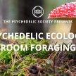 Mushroom Foraging Walk image