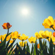 Spring Bliss Day Retreat image