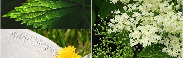 Hedgerow Medicine & Foraging Part 1