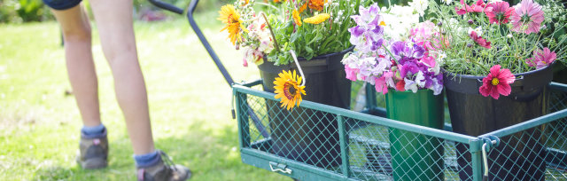 Special events to celebrate British flowers
