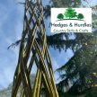 Willow Harlequin Tree - Birtley Woodland Art Space image