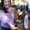 Carving Pumpkins with Goats image