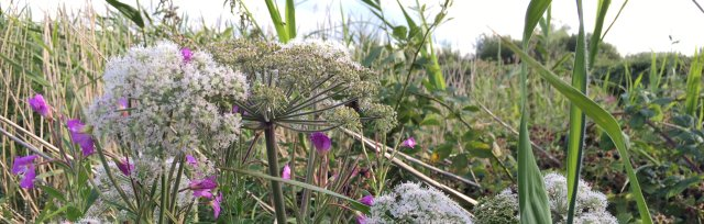 Cambridgeshire Autumn Wild Food Foraging Course/Walk