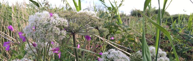 Cambridgeshire Spring Wild Food Foraging Course/Walk