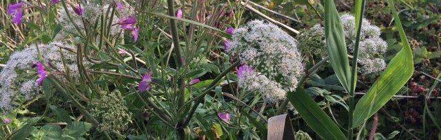 Warwickshire Spring Wild Food Foraging Course/Walk