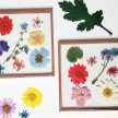 Pressed Flower Collage Workshop image