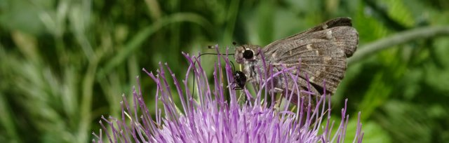 Pollinator Habitat Design Workshop - Focus on Native Plant Materials