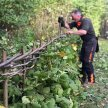 Hedgelaying & Coppicing Training Course image